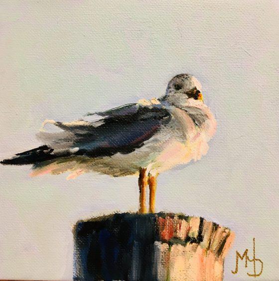adigital photo of a fluffy seagull