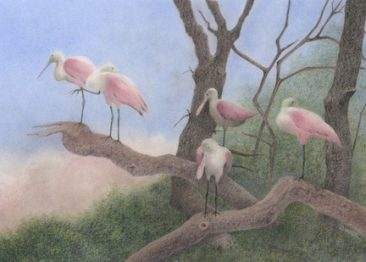 Tuttle Roosting Spoonbills, colored pencil painting of several spoonbill birds on tree branches, Hirdie Girdie Gallery