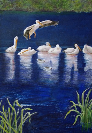 Tuttle Snowbirds, colored pencil painting of white pelicans in blue waterirdie Girdie Gallery
