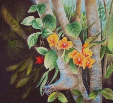 Tuttle Tree Orchids, colored pencil painting of an orange orchid plant growing in tree branches, Hirdie Girdie Gallery