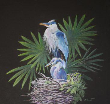Tuttle, Proud Parent, colored pencil painting of blue heron and babies on black background Hirdie Girdie Gallery