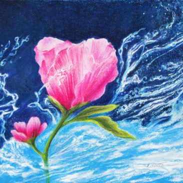Tuttle, Water Rose, colored pencil painting of a Rose of Sharon with water splashes on a blue background, Hirdie Girdie Gallery