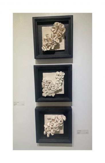 sue housler framed wall sculpture featuring white coral